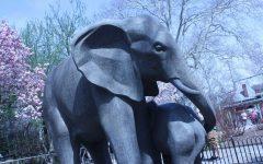 Art of the Zoo