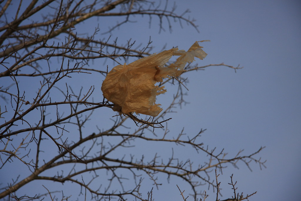 Plastic bag stuck in tree